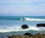 matapalo-surf