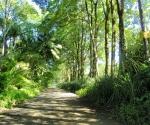 Pavones Beach Road
