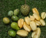 Fruit in Pavones