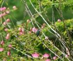 Hummingbird in Pavones