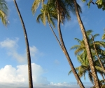 Palms in Pavones